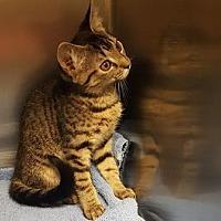 Adopt A Pet :: Nira - Americus, GA
