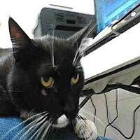 Adopt A Pet :: MICK JAGER - Albuquerque, NM