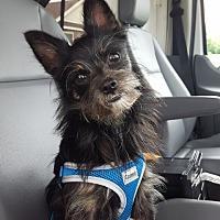 Adopt A Pet :: Lucky - Georgetown, KY