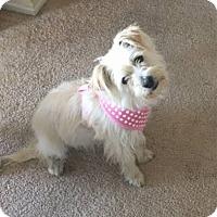 Adopt A Pet :: Jackie gets along w everyone! - Redondo Beach, CA