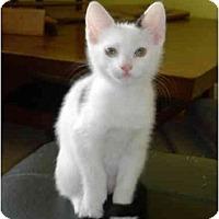 Adopt A Pet :: Laurel - Tomball, TX