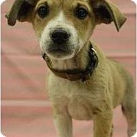 Adopt A Pet :: Durango - Broomfield, CO