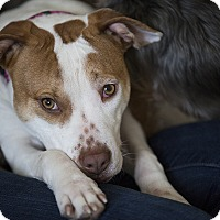 Adopt A Pet :: Leia - Marlton, NJ