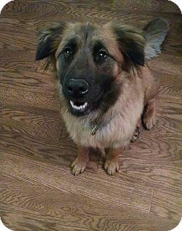 Sheltie, Shetland Sheepdog/Shepherd (Unknown Type) Mix Dog for adoption in Woodstock, Georgia - Mia