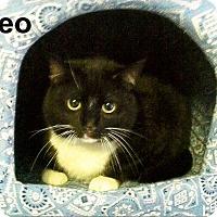 Adopt A Pet :: Oreo - Medway, MA