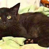 Adopt A Pet :: Sebastian - Davis, CA