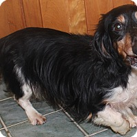 Adopt A Pet :: Chip - Chapel Hill, NC