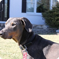 Adopt A Pet :: Brutus--pending - New Richmond, OH