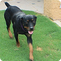 Adopt A Pet :: Legion - Gilbert, AZ