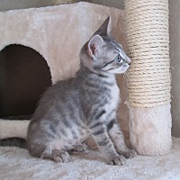 Adopt A Pet :: Rain - San Bernardino, CA