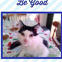 Adopt A Pet :: Prince Johnny Be Good - Bogalusa, LA
