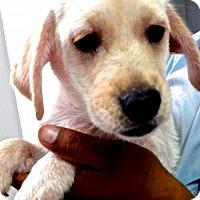 Adopt A Pet :: Marilyn - San Diego, CA