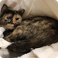 Adopt A Pet :: Baby 35660094 - Westampton, NJ