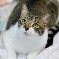 Adopt A Pet :: Nubby - Charleston, SC