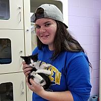 Adopt A Pet :: Jungle Jim - Elyria, OH