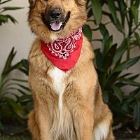 Adopt A Pet :: Rufio - Rancho Palos Verdes, CA