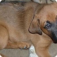 Adopt A Pet :: Joy - Burr Ridge, IL
