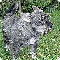 Adopt A Pet :: Angus - Loveland, CO