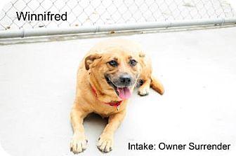 Terrier (Unknown Type, Medium) Mix Dog for adoption in Hamilton, Ontario - Winnifred