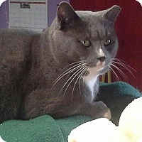 Adopt A Pet :: Boo - Raritan, NJ