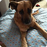 Adopt A Pet :: Jenny - Tumwater, WA