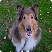 Adopt A Pet :: Gavin - Powell, OH