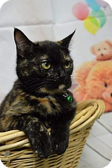 American Shorthair Cat for adoption in Rockwood, Tennessee - LENA