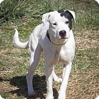 Adopt A Pet :: Skeeter - Bedford, IN
