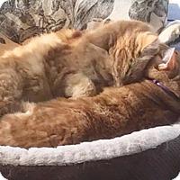 Adopt A Pet :: Milton - North Highlands, CA