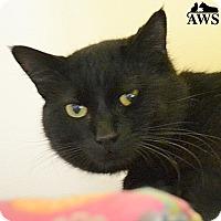 Adopt A Pet :: Jafar - West Kennebunk, ME