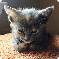 Adopt A Pet :: Juno - Nolensville, TN
