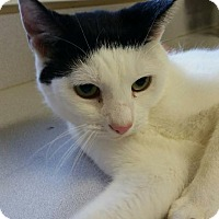 Adopt A Pet :: Chili Willy - Shelbyville, KY