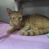 Adopt A Pet :: Wonka - Munster, IN