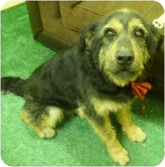 Terrier (Unknown Type, Medium) Mix Dog for adoption in Youngwood, Pennsylvania - Tommy