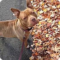 Adopt A Pet :: Delia - Bradenton, FL