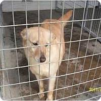 Adopt A Pet :: Molly - Farmingtoon, MO