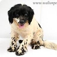 Adopt A Pet :: O'Higgins - Wilmington, MA
