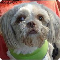 Adopt A Pet :: Mags-VA - Mays Landing, NJ