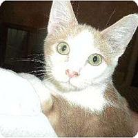 Adopt A Pet :: Oblie-o - Wenatchee, WA