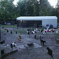 Adopt A Pet :: Barn cats - Houston, TX