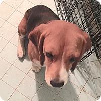 Adopt A Pet :: Walker - Houston, TX