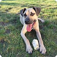 Adopt A Pet :: Caden - Hopkinton, MA