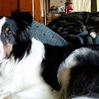 Adopt A Pet :: Conall - Mission, KS