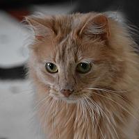 Adopt A Pet :: Ellie - Pine Bush, NY