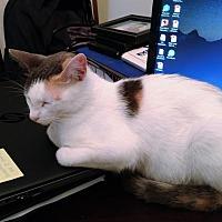 Adopt A Pet :: Argentina (7775) - Tampa, FL