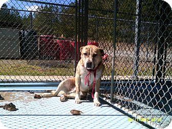 Pit Bull Terrier Mix Dog for adoption in Dundas, Virginia - Samuel