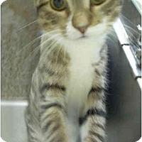 Adopt A Pet :: Calvin - Bartlett, TN
