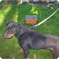 Adopt A Pet :: TOBY JAMES - latrobe, PA