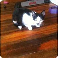 Adopt A Pet :: Pierre - West Park, NY