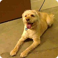 Adopt A Pet :: Champ ADOPTED!! - Antioch, IL